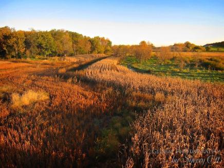 Fall Colors Minnesota 3