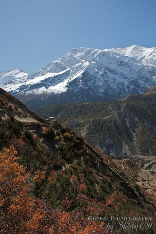 Fall Colors Nepal 8