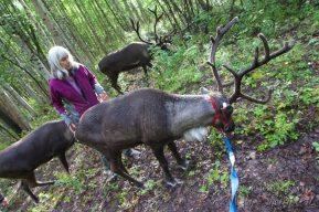 pictures of reindeer