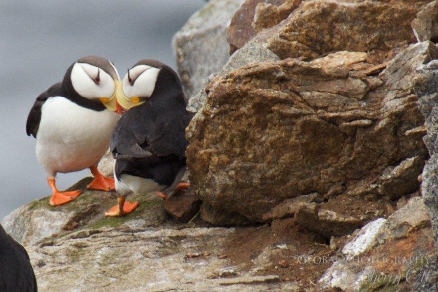 Bird Watching Kolyuchun Island Russia