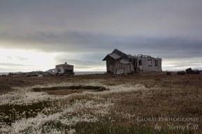 Wrangel Island 3
