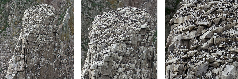 Bird watching at bird cliffs