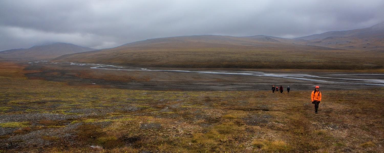 tundra plants