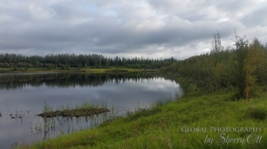 things to do in Fairbanks wedgewood wildlife sanctuary