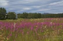 nome alaska tundra trees