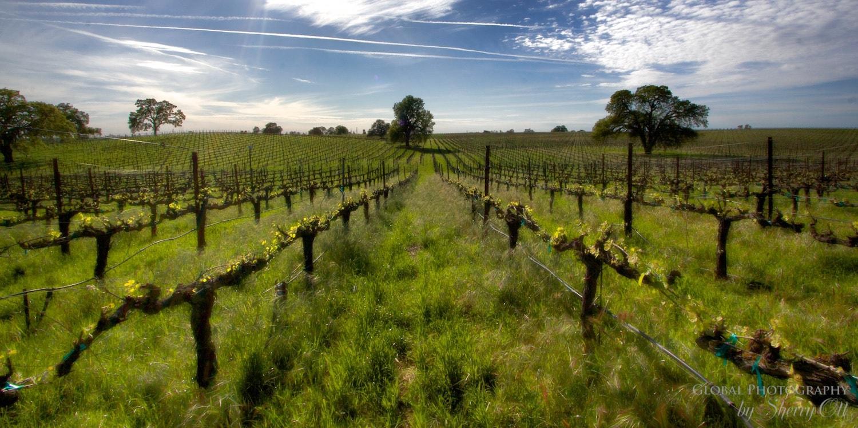 California Road Trip Lodi Wines