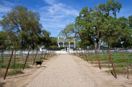 Oak Farm Vineyards Lodi California