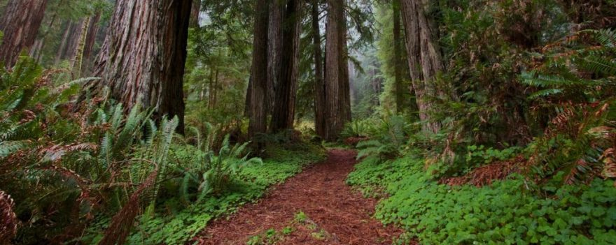 affordable forest bathing california