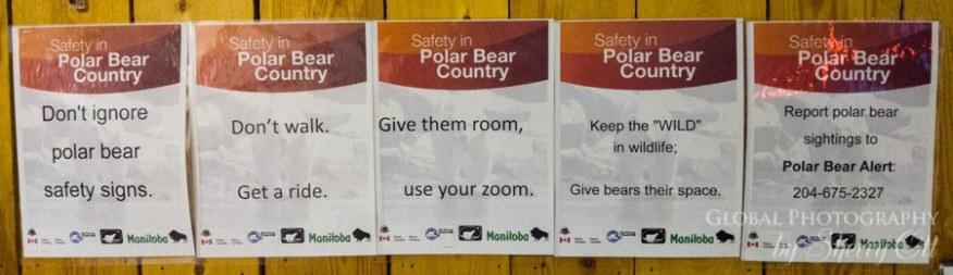 polar bear alert