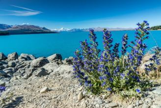 drive to Lake Pukaki New Zealand
