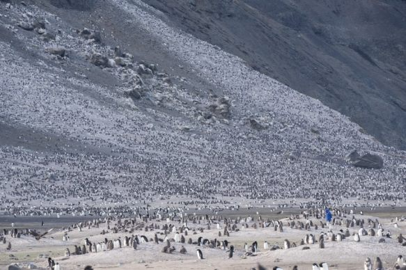 Franklin Island Ross Sea Adelie penguins