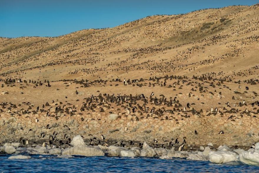 Posession island Ross Sea