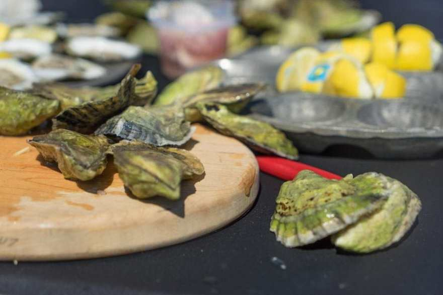 Maine Road Trip oysters