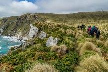campbell island new zealand