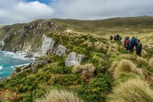 campbell island new zealand