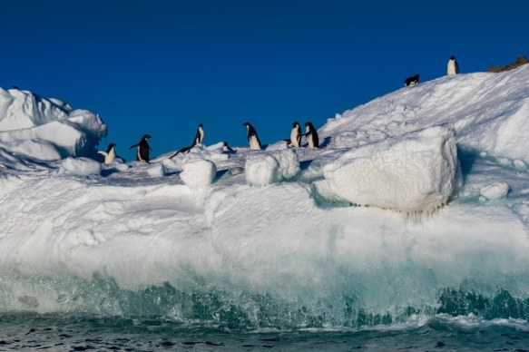 Ross Sea wildlife