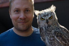 Alberta birds of prey horn owl