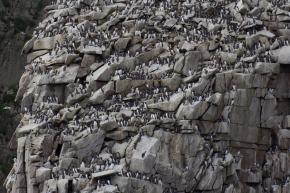 Wrangel Island Extreme destinations