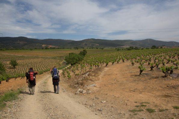 Camino family