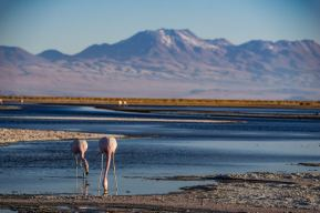 atacama desert tours flamingos