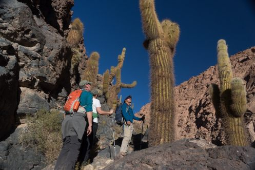 atacama desert tours hiking cactus