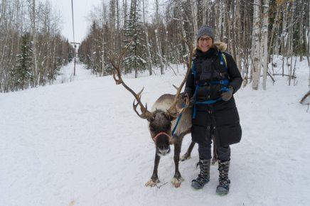 Fairbanks Alaska Winter reindeer