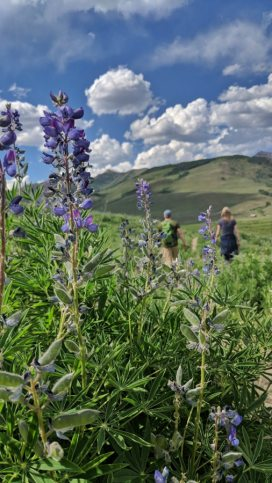 crested butte hiking wildflowers