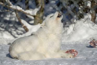 Quebec winter activities