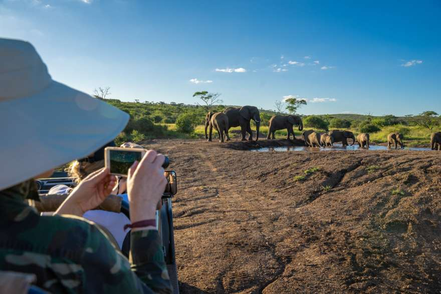 safari photography with phone