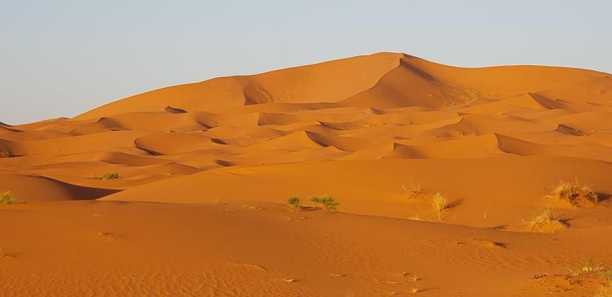 sahara desert dunes low sun
