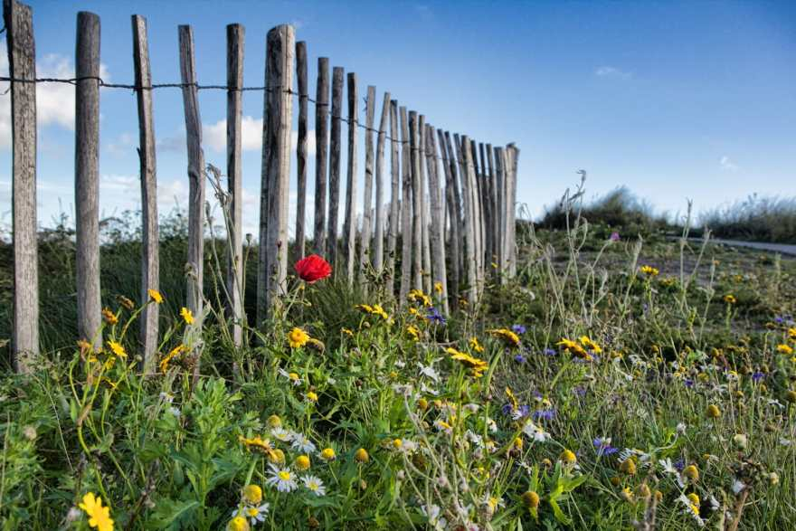 ireland wildflowers