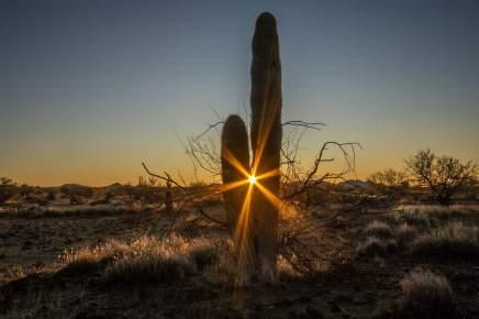 cactus du désert de scottsdale