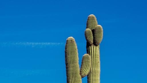 scottsdale desert saguaro cactus