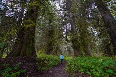 Walking through the cedar trees