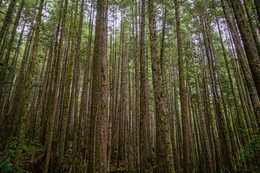 visit great bear rainforest