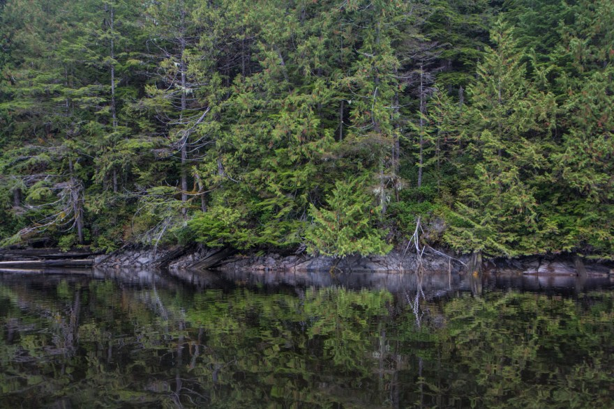cercle de vie dans la forêt tropicale du grand ours