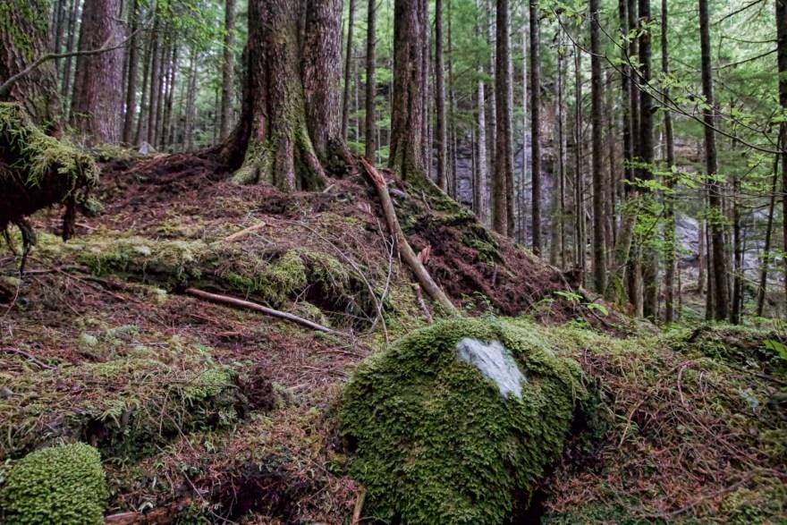 coeur de la forêt tropicale du grand ours