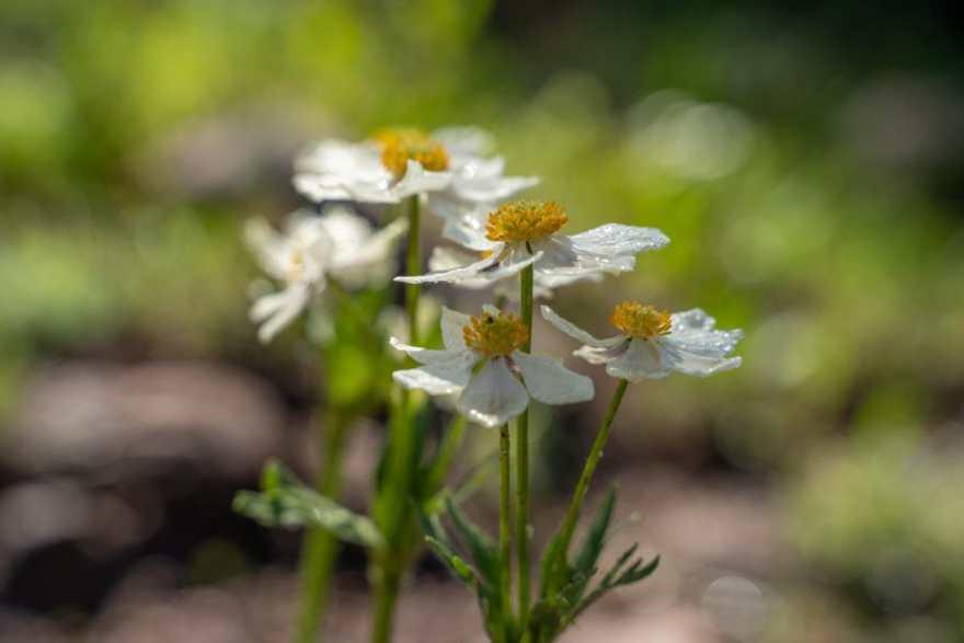 vail wildflower hike