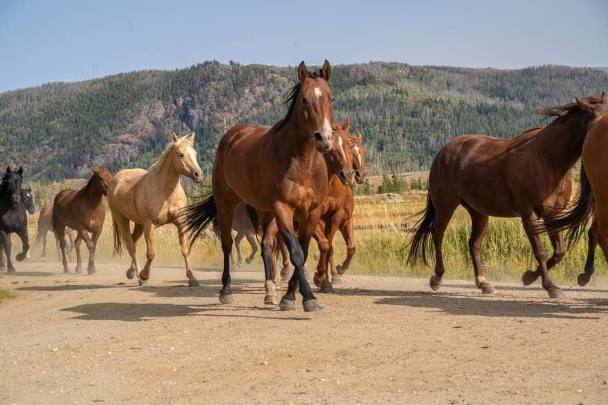 vista verde ranch horses