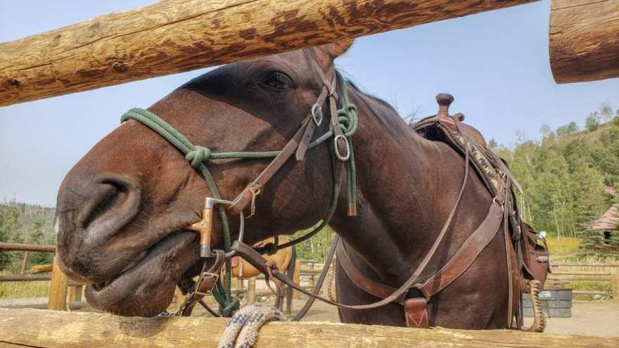Jake the horse