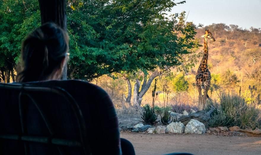 giraffe visiting the camp