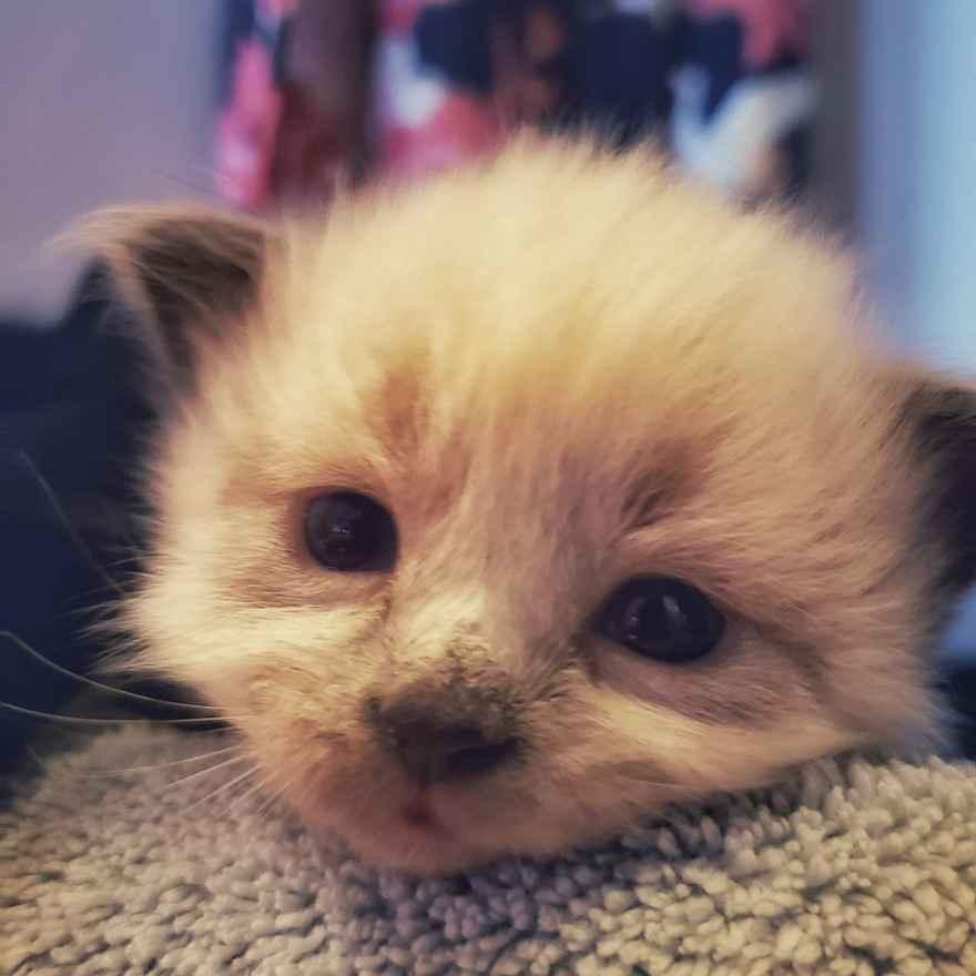 3 week old kitten