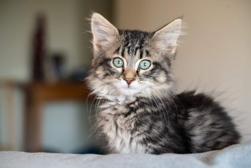 kitten 6 weeks old