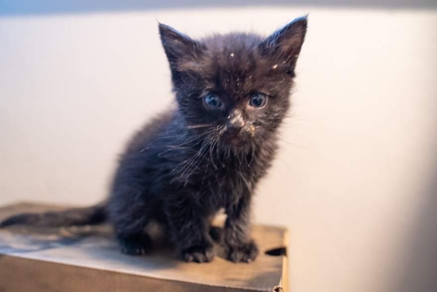 foster kitten 4 weeks old