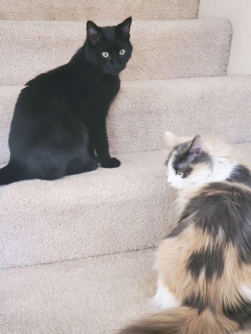 foster kitten in new home