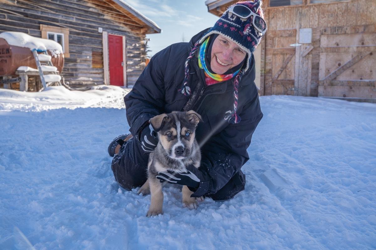alaska sled dog puppy
