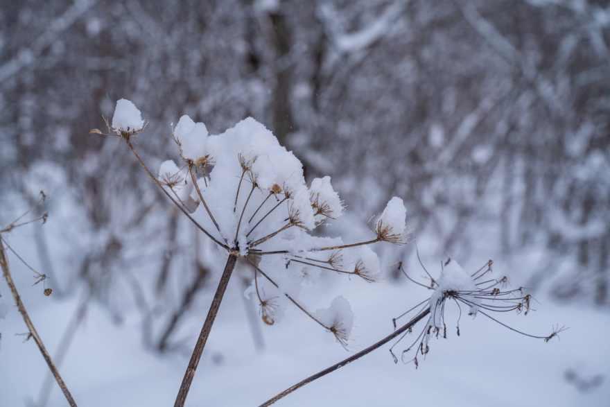 Talkeetna snowshoeing