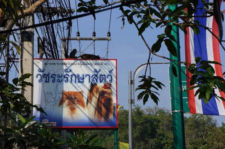 boutique pour animaux en Thaïlande