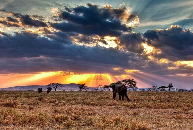 safari en afrique en tanzanie : parc serengeti
