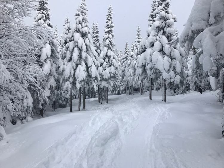 Piste de ski à travers les arbres